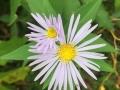 flora2web
