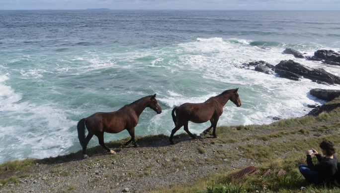 Sea & Horses. Photo credit - Diane Clarke. 3rd Place - Fauna
